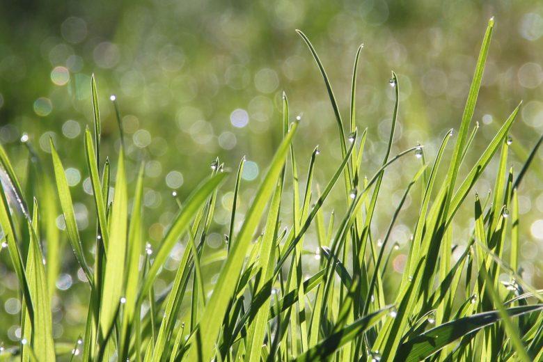 Tips voor het verzorgen van een nieuw aangelegd gazon met graszoden