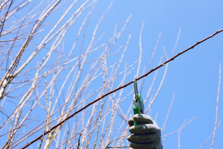 Waar moet je op letten bij het snoeien van bomen en struiken