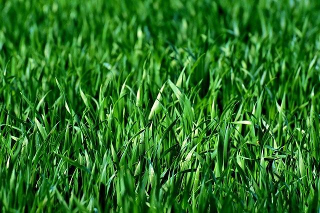 6 redenen om te kiezen voor graszoden