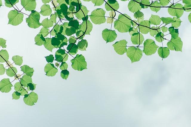 kunstboom zonder uitval
