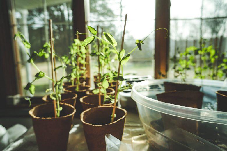 Tuinkas voor elke grote en kleine tuin
